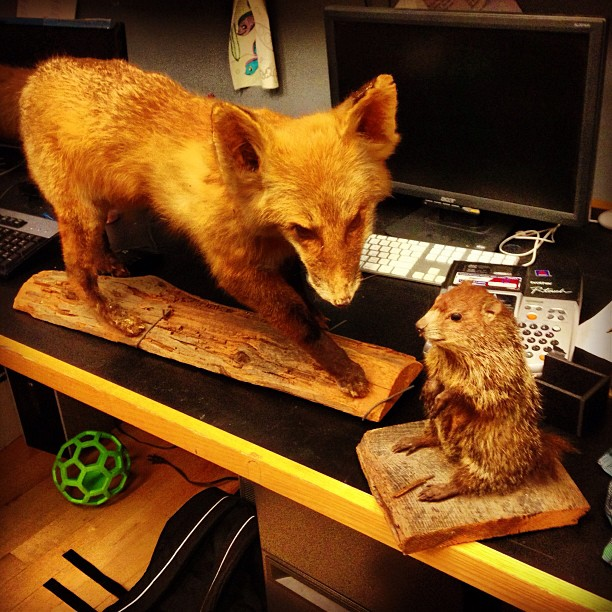 A fox and a groundhog walk into a production office.  #patronsaintplay